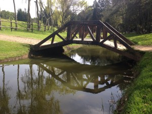 De este día fueron las fotos que compartí del Parque Simón Bolívar